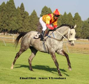 The Gharir (IRE) gelding, Final Fling - second run after a layoff.