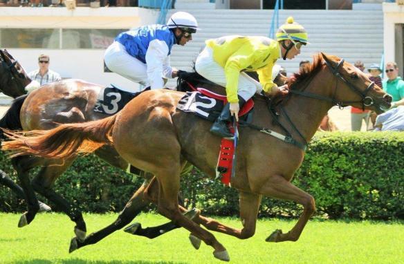 Duffi's Call McNaughton) Master of The Sky (Chambers) 1st race