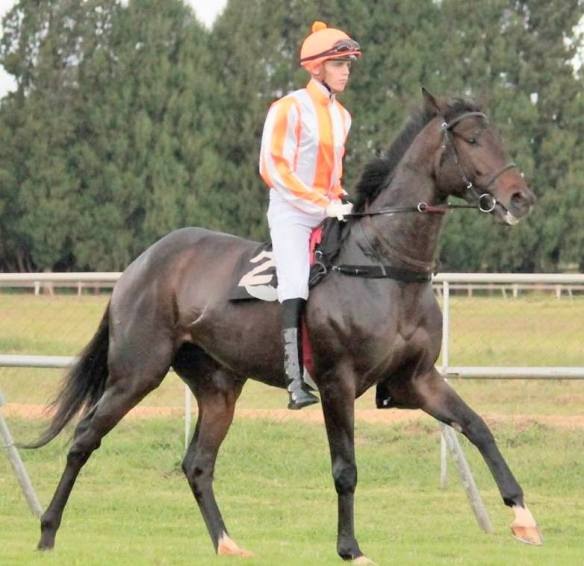 Comanche Brave Callan Murray 2016/17 joint Horse Of The Year