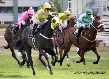 horses Gavin
